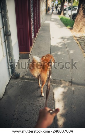 Walk with a red dog on city street in summer