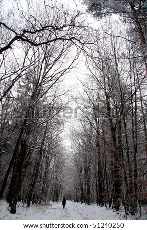 walking alone through winter forest