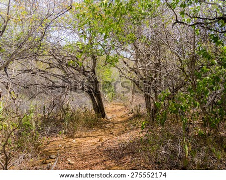 Walking around Christoffel National park - Curacao a tropical island in the Caribbean - stock photo