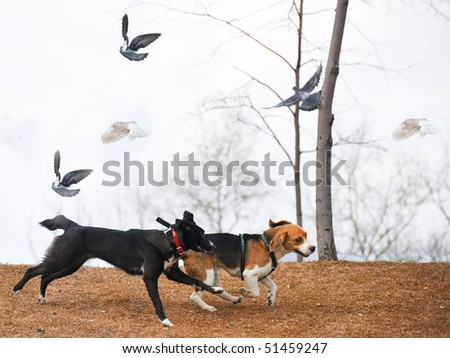 walking dogs - stock photo