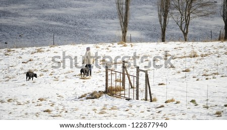 walking dogs in snow covered field