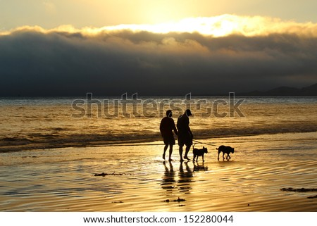 Walking dogs on beach at sunset - stock photo