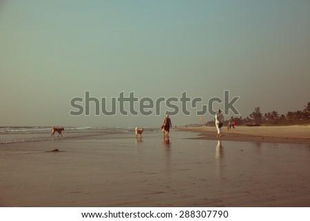 Walking dogs on beach at sunset - stock photo