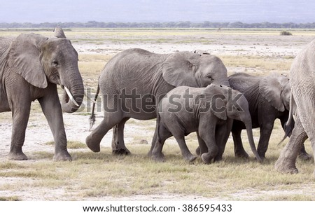 Walking elephant family.