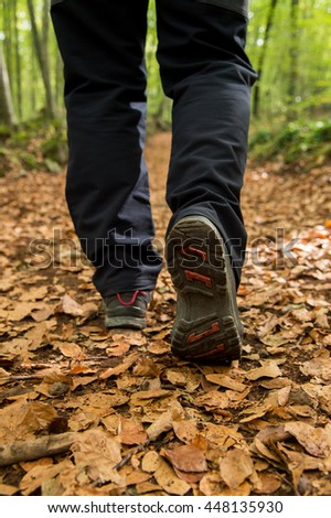 Walking in a beech forest