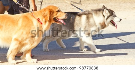 walking on the street with dog - stock photo