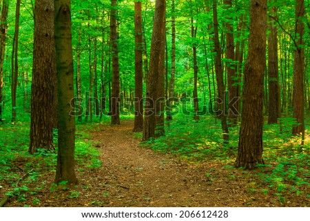 walking path in a summer park - stock photo