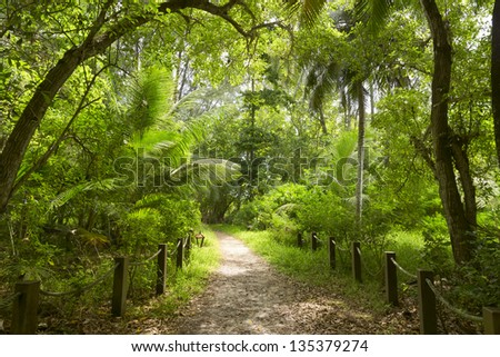 Walking path in green forest. Seychelles. Mahe island. Sunrise. - stock photo