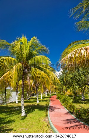 Walking path with palm trees at tropical park