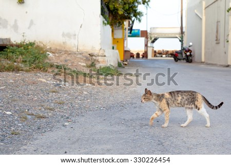 Walking small homeless cats on a yard 