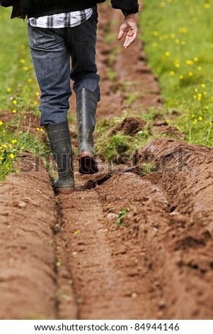 Walking the furrows as a field is ploughed.