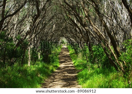 Walking track with trees forming a beautiful tunnel to walk through in victoria australia - stock photo