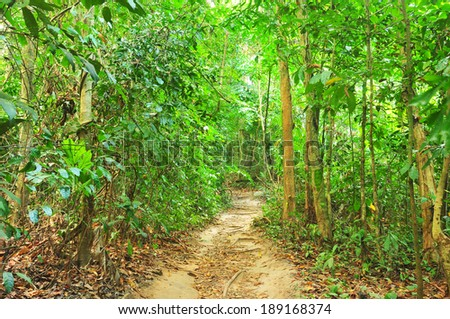 Walking trail in tropical forest  - stock photo