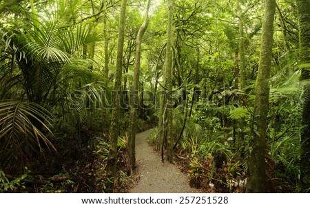 Walking trail in tropical forest