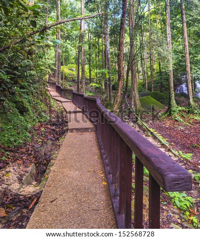 Walking trail inside tropical forest - stock photo