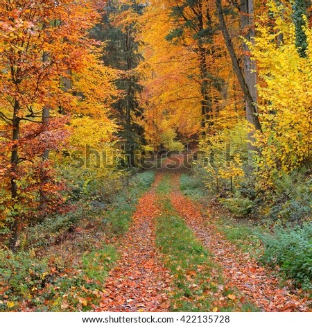 Walkway in a beautiful autumn beech tree forest near Heidelberg, Germany - stock photo