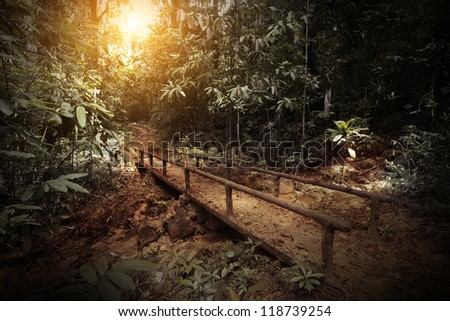 Walkway in a dark and wild tropical forest - stock photo