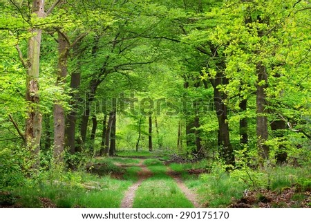 Walkway in a spring forest in the Netherlands - stock photo