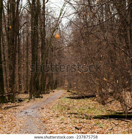 walkway in the autumn forest - stock photo