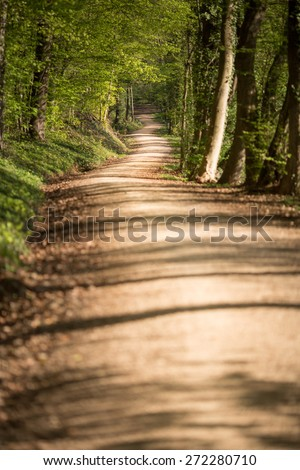 Walkway Lane Path With Green Trees in Forest  - stock photo