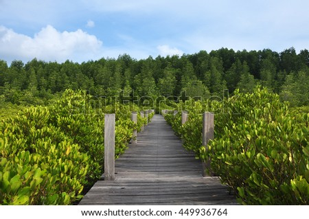 Walkway made from wood and mangrove field. Boardwalk in Tung Prong Thong Golden Mangrove Field, Rayong Province, Thailand.