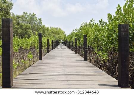 Walkway made from wood and the mangroves . Boardwalk in mangroves field, Rayong, Thailand.