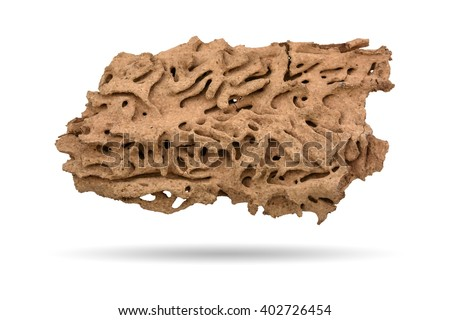 Walkway of Termite, Termite nest, home of Termite with shadow on white background - stock photo