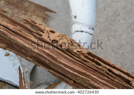 Walkway of Termite, Termite nest on Wood of house, home with Cement - stock photo
