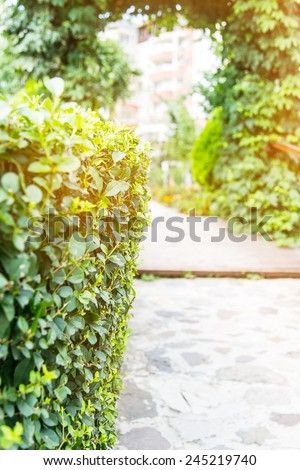 walkway path plant Green Day - stock photo