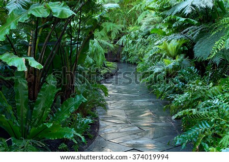 walkway through lush green tropical jungle of fern flora  - stock photo