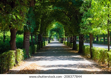 Walkway under a green natural tunnel - stock photo