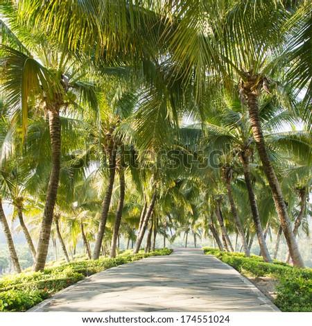 Walkway with coconut tree in the garden  - stock photo
