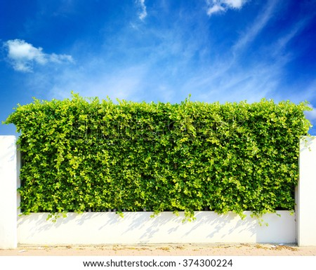 Wall green leaves and sky  - stock photo