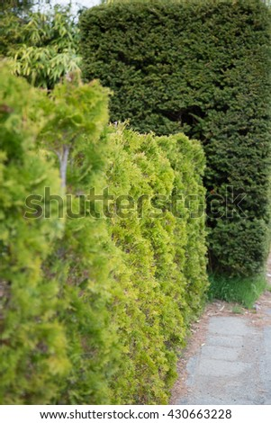 Wall Green trees in park - stock photo