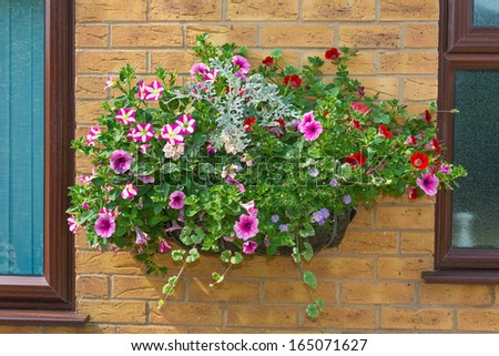 Wall mounted hanging baskets with a range of summer flowers