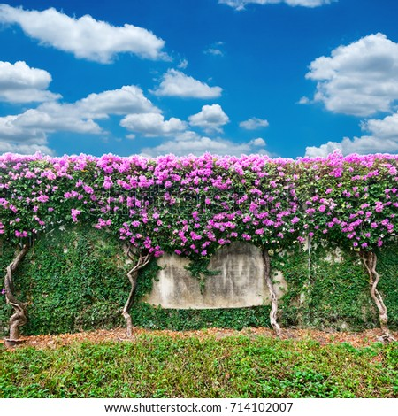 Wall of flowers against blue sky