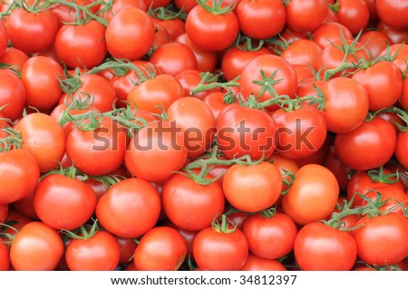 Wall of fresh tomatoes on branch