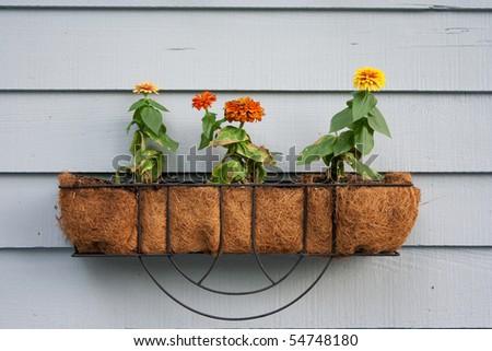 Wall planter - stock photo