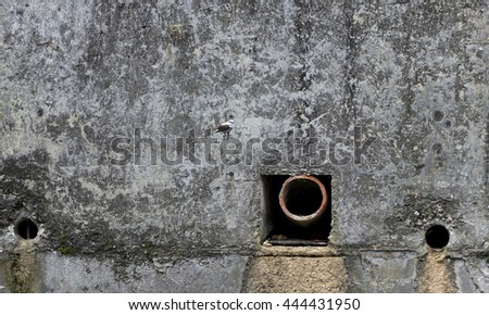 Wall river - perched bird - of sewage outlet - stock photo