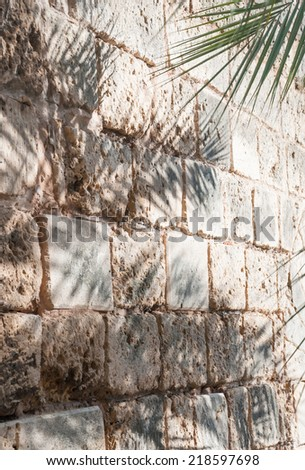 Wall with palm shadows. Details Palma, Palma de Mallorca, Balearic islands, Spain in November. - stock photo