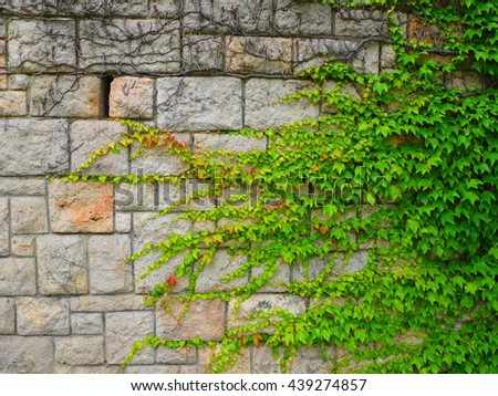 Wall with vine