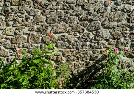 wall with wild flowers