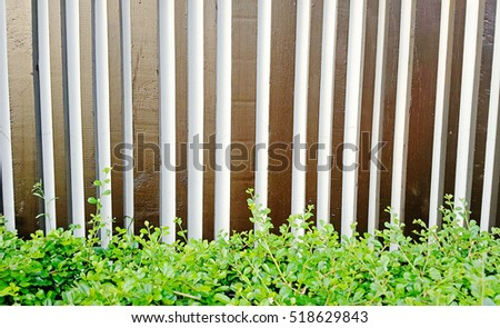 Wall Wood Background and Texture with green leaves