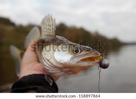 Walleye caught on handmade jig lure, close-up on head - stock photo