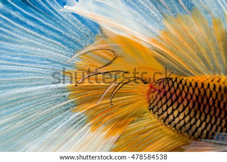wallpaper of white & yellow fish tail on black background