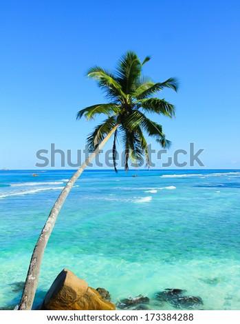 Wallpaper Paradise Trees  - stock photo
