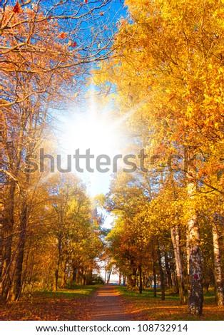 Wallpaper Sunshine Foliage Beams - stock photo