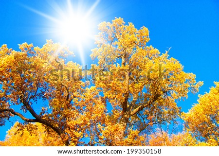 Wallpaper Sunshine Yellow Trees  - stock photo