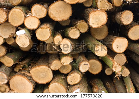 Wallpaper with trunks of several tree - stock photo