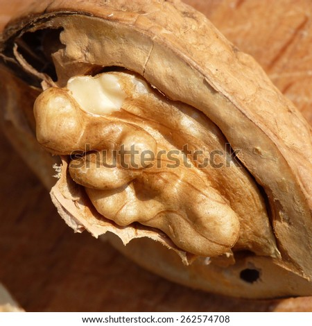 walnut close up - stock photo